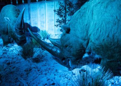 Rhinocéros laineux + Elasmotherium