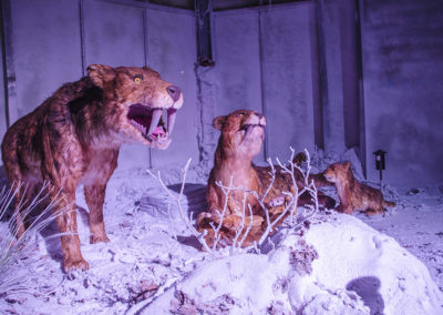 Tigres à dents de sabre